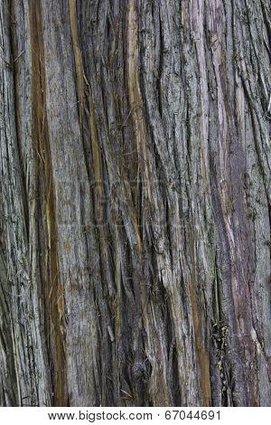 Bark - Western Red Cedar