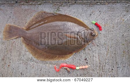 Freshly Flat Fish - Common Dab
