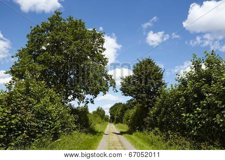 Landscape With Farm Lane And Trees Under A Blue Sky With White Clouds