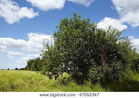 Landscape With Trees And Bushes With Blue Sky And White Clouds