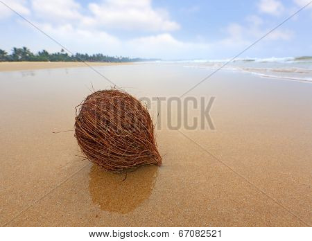 coconut on wet ocean beach