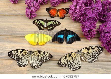 Beautiful butterflies and lilac flowers, on wooden background