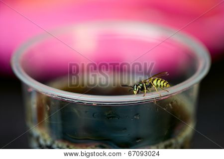 Wasp On The Cup