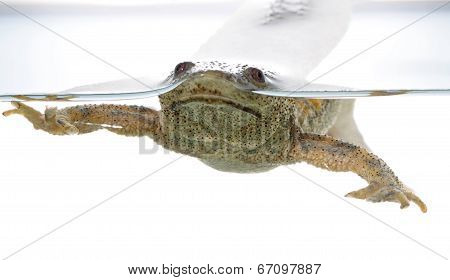 Spanish Amphibious