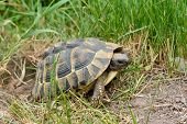 foto of laying eggs  - Turtle Laying Eggs in garden on summer time - JPG