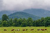 image of horses eating  - Horses eating green grass on mountain meadow - JPG