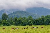 foto of horses eating  - Horses eating green grass on mountain meadow - JPG