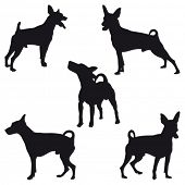 image of miniature pinscher  - Five Miniature Pinscher black silhouettes - JPG