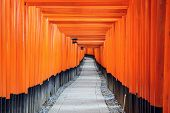 image of inari  - Fushimi Inari Taisha Shrine torii gates in Kyoto - JPG