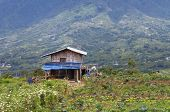 stock photo of minangkabau  - Indonesian Barn in countryside - JPG