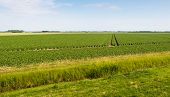 stock photo of solanum tuberosum  - Dutch agricultural landscape with a creek and many rows of growing potato plants on a sunny day in the early summer season - JPG