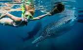stock photo of cebu  - Underwater shot of the young lady snorkeling with whale sharks - JPG
