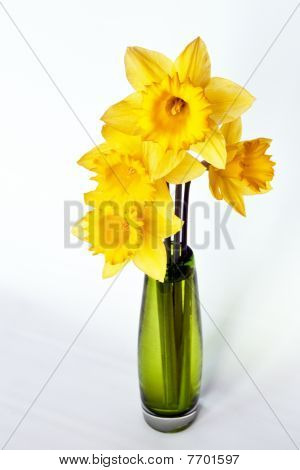 Yellow Daffodil in Green Vase