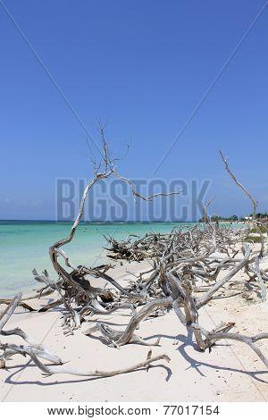 Dreaming Cuba beach