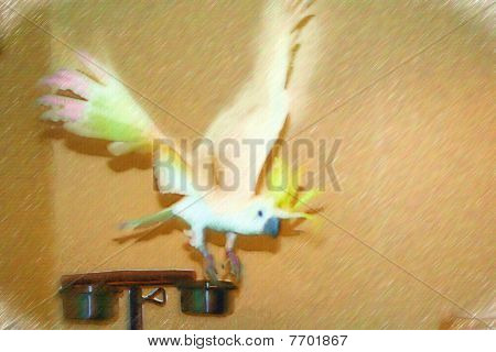 Stock Image Of Australian Sulphur Crested Cockatoo