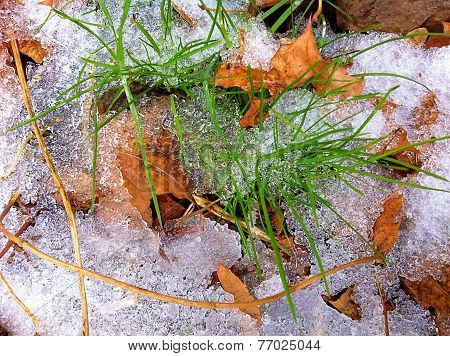 Grass, leaves, ice