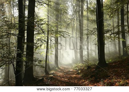 Forest path surrounded by fog