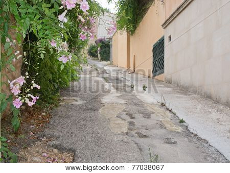 Alley and flowers