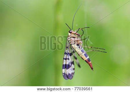 Insect On Green Background