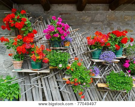 Flowers In Carnia