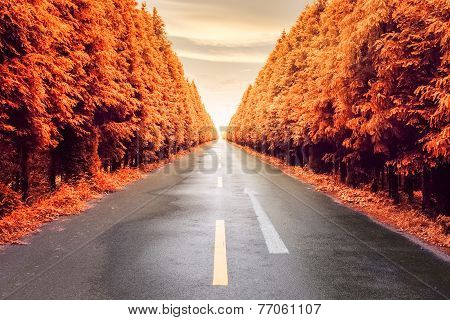 Autumnal Asphalt Road