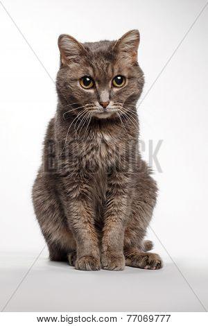 gray cat sitting on white