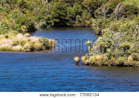 The New Zealand Native Bush And Lake