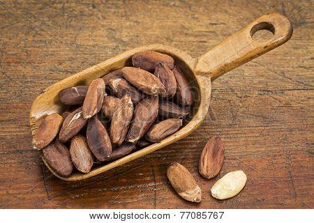 rustic scoop of roasted pili nuts against grunge wood table