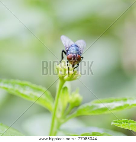 A Robber Fly Perching On A Green Leaf