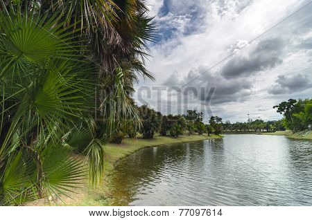 Palm Trees At The Lakeside