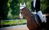 stock photo of horse-riders  - children dressage - JPG