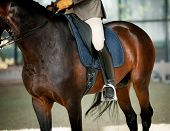 pic of horse-riders  - Horse riding - JPG