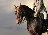 picture of horse-riders  - Horse riding - JPG
