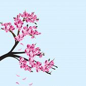 stock photo of japanese magnolia  - Illustration of a magnolia tree in blossom - JPG