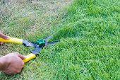 picture of grass-cutter  - Scissors cut grass put in garden during cut - JPG
