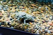 image of creeping  - Photo of a small green creeping terrapin - JPG
