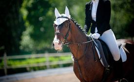 pic of horse-riders  - children dressage - JPG