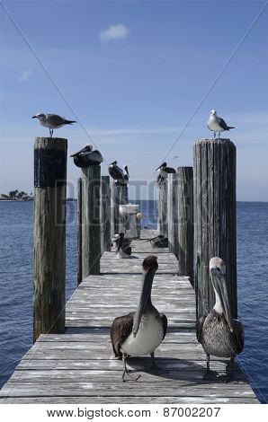 Pelicans resting on a dock