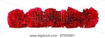 Red carnation border