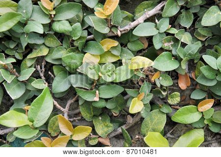 Dense green thicket of tropical ornamental plants. Abstraction. Background.