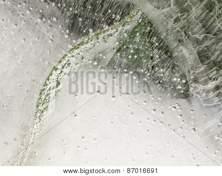 Plants And Air Bubbles In The Ice