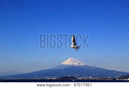 Fuji Mountain in Winter