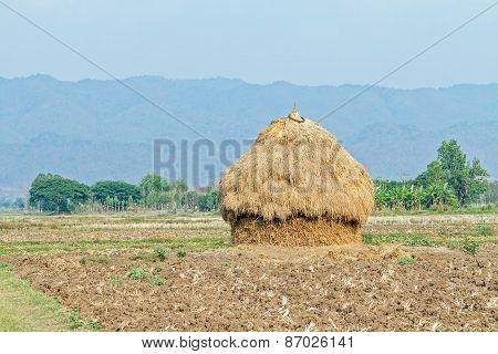 A Pile Of Straw On Rural Paddy Field