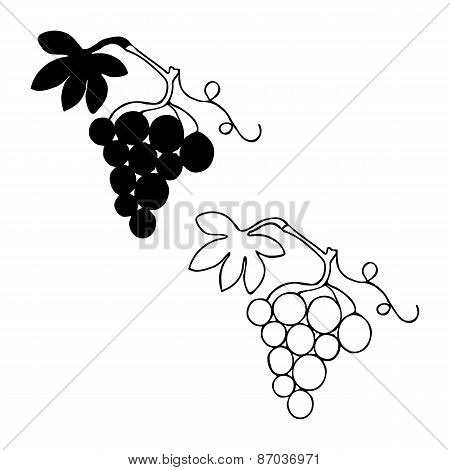 Bunch of grapes with leaf