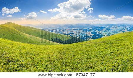 Wild Grass On Mountain Top
