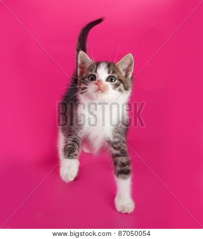 White Spotted Kitten Sitting On Pink