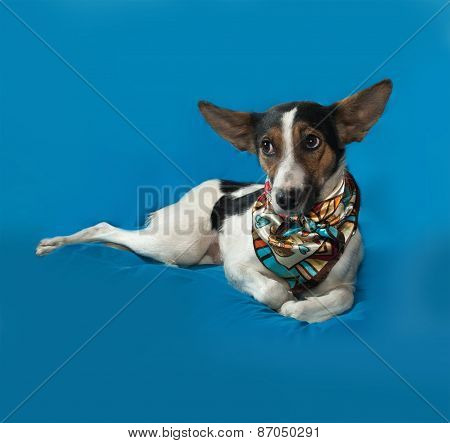 White, Red And Black Dog With Big Ears Lies On Blue