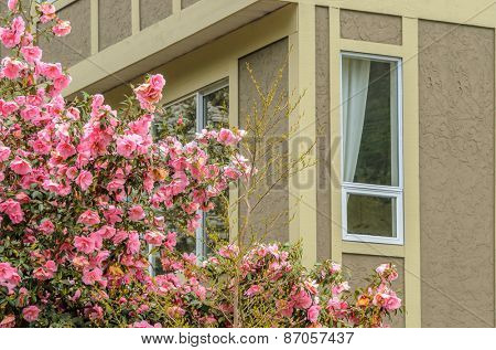 Fragment of the house with nice window and flowers in front. Selective focus.