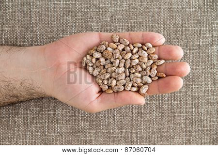 Man Holding A Handful Of Dried Pinto Beans