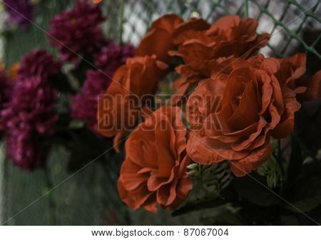 Close Up Orange Trumpet, Flame Flower, Fire-cracker Vine